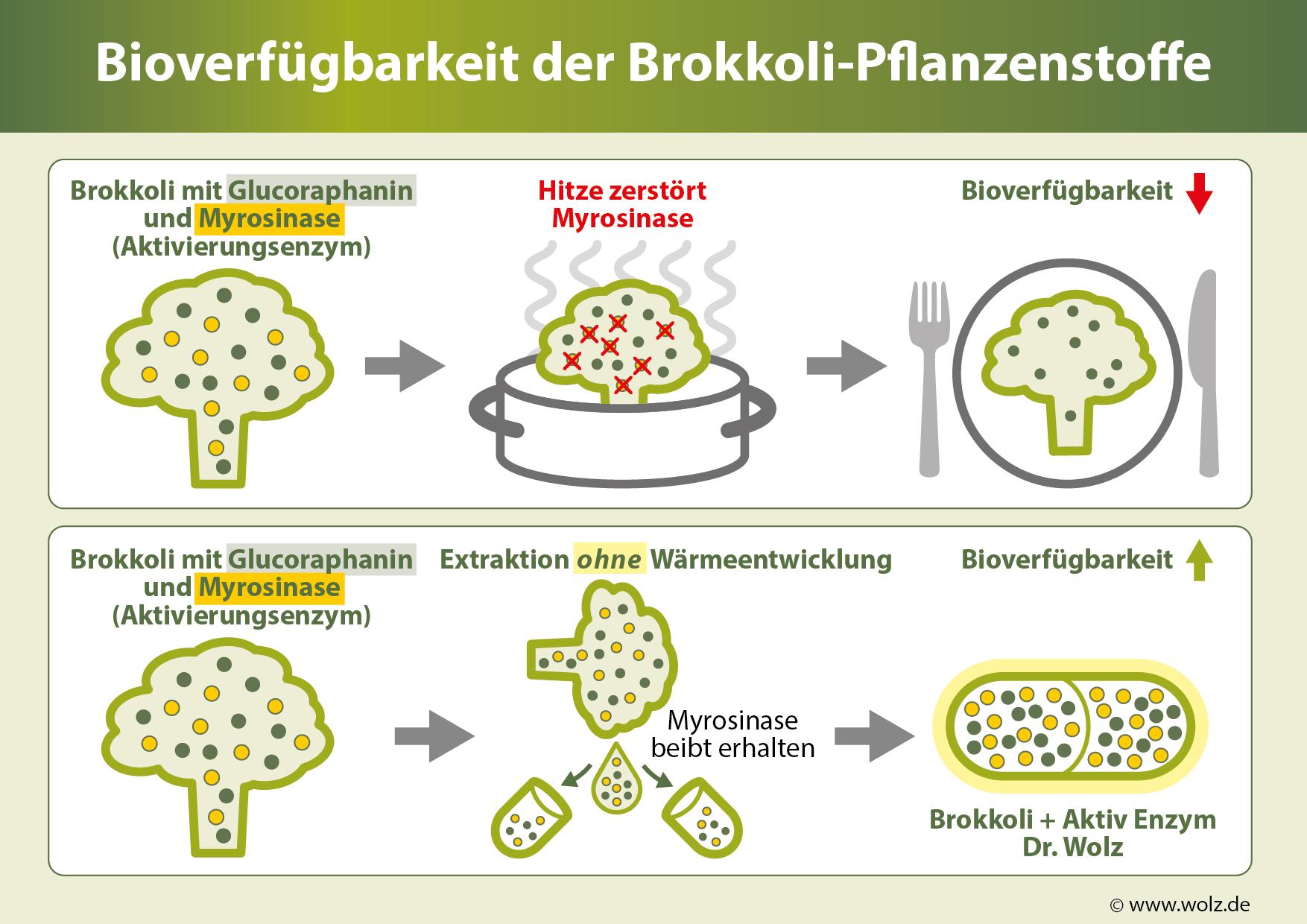 Bioverfügbarkeit der Brokkoli-Pflanzenstoffe